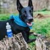 Pet tincture dog